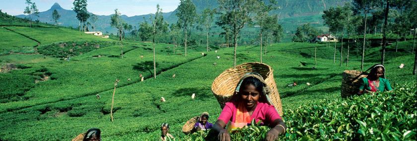 Sri Lanka Reiseziele | Nuwara Eliya