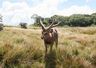 Sri Lanka Urlaub | Horton Plains