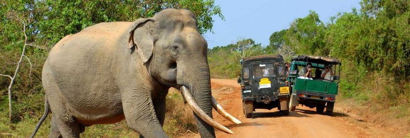 Sri Lanka Reiseziele | Yala National Park