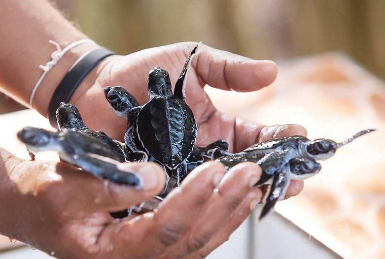 Sri Lanka | Schildkröten Station in Kosgoda