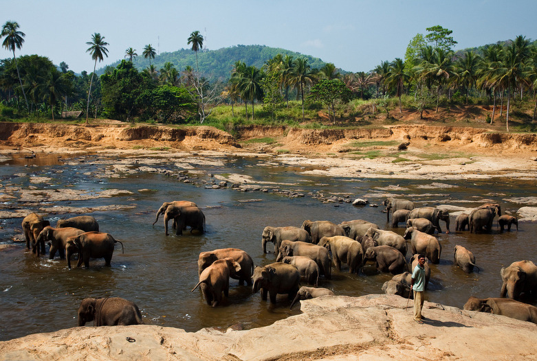Sri Lanka | Elefanten Waisenhaus