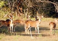 Sri Lanka Urlaub | Tiere Rehe