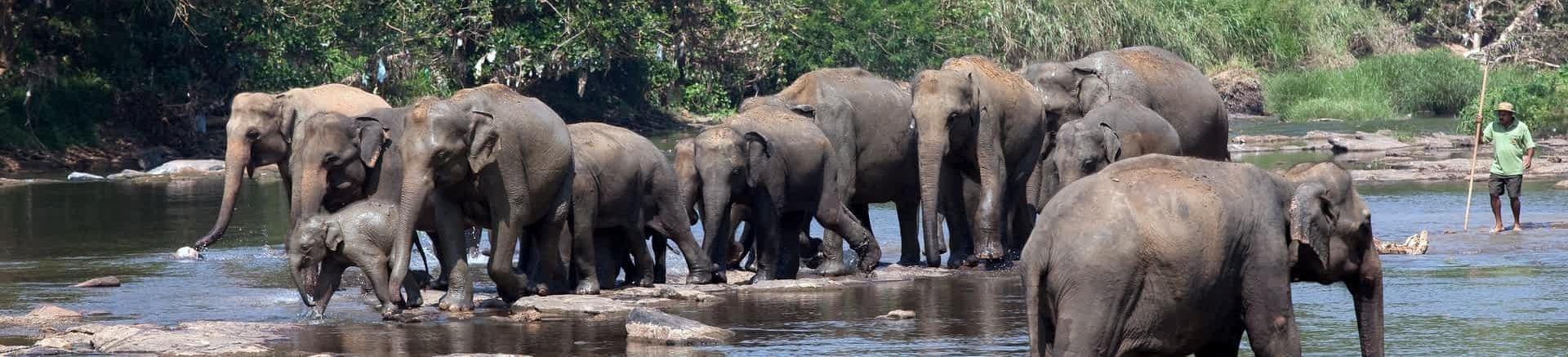 "Elefanten ""Waisenhaus"""