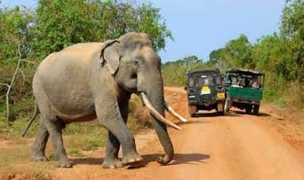 Wie Sie zu Ihrem Traum Sri Lanka Urlaub kommen