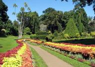 Sri Lanka Urlaub| Botanical Garden of Peradeniya in Kandy