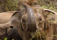 Sri Lanka Urlaub | Tiere Elefant