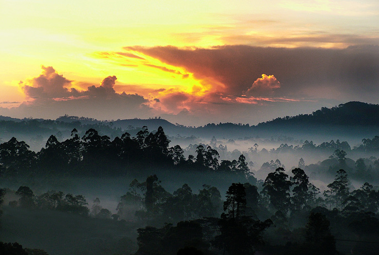 Sri Lanka | Sonnenuntergang hinter Nebelwald